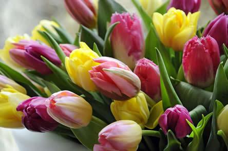 Tulpen plukken voor positieve energie (4)